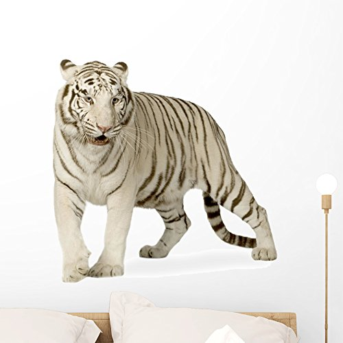 Wallmonkeys White Tiger Years Wall Decal Peel and Stick Graphic WM347296 (24 in W x 22 in H)