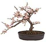 SKB Family Cherry Blossom Bonsai Silk Tree beautiful symbolizing elegance decorative