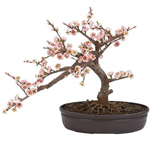 SKB Family Cherry Blossom Bonsai Silk Tree beautiful symbolizing elegance decorative by SKB family
