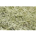 Yokoke-Artificial-Pineapple-Grass-Hanging-Air-Plants-35-Fake-Flowers-Faux-Succulents-Flocking-Tillandsia-Bromeliads-Wall-Decoration