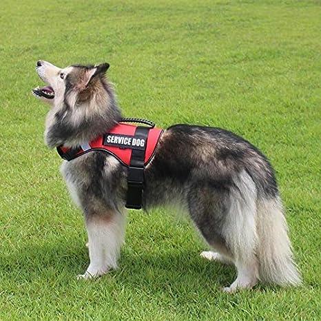 IN THE DISTANCE FML Arnés para Mascotas para Perros Grandes ...