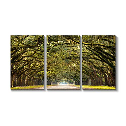 Grander Group Landscape Artwork Forest Avenue Picture - Oak Trees with Spanish Moss Print on Canvas