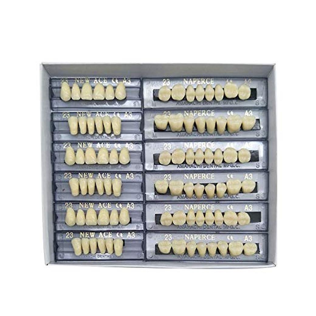 さわやか翻訳する作者SHINA 12セット合成ポリマー樹脂義歯 上+下歯科セット (A3)