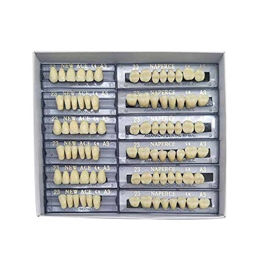 後世黄ばむするSHINA 12セット合成ポリマー樹脂義歯 上+下歯科セット (A3)
