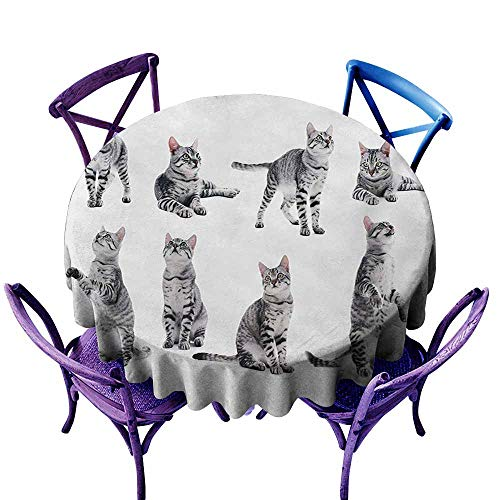 Stain Resistant Round Tablecloth,Cat Collage of a Cute Inquisitive Striped Shorthair Furry Playful Pussy Posing Art Print,High-end Durable Creative Home,55 INCH,Grey White (Best Pussy On Net)