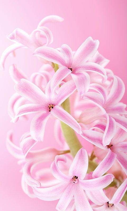 Amazon pink flower wallpaper appstore for android mightylinksfo