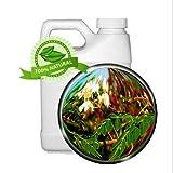 Moringa Leaf Oil Extract - Moringa Oleifera - 32oz - Super Antioxidants, Macronutrients, Phenolic compounds, Amino acids, Vitamins, Chlorogenic and Behenic Acid