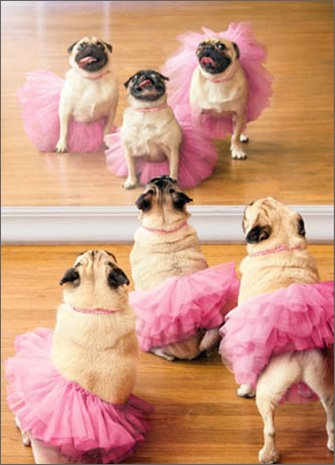 Amazon Ballerina Pugs Funny Dog Birthday Card Office Products