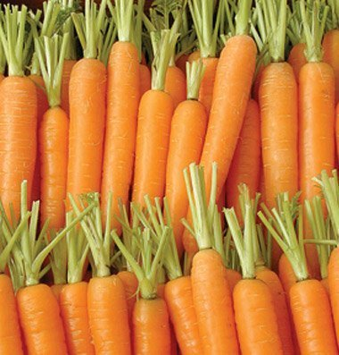 David's Garden Seeds Carrot Napoli D09AN (Orange) 500 Organic Hybrid Seeds