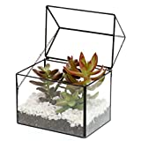 Barnyard Designs Watertight Glass Terrarium House Succulent Plant Container Tabletop Decor 8'' x 7.75'' (Black)