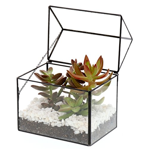 Barnyard Designs Watertight Glass Terrarium House Succulent Plant Container Tabletop Decor 6 x 6.5 x 4 (Black)