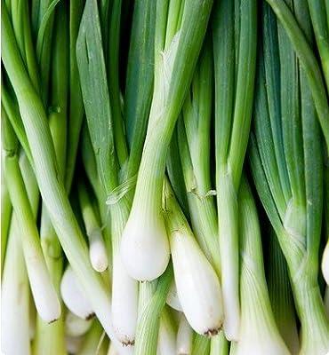 Tokyo Long White Bunching Onion Scallions 200 Seeds (Organic) UPC 647923989557