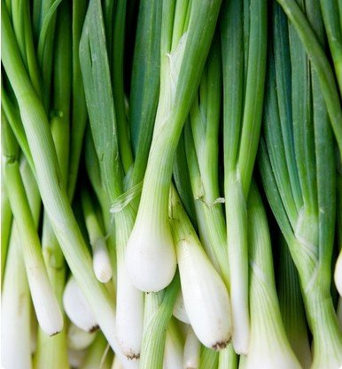 Tokyo Long White Bunching Onion Scallions 200 Seeds (Organic) UPC 647923989557 (Spring Onions)