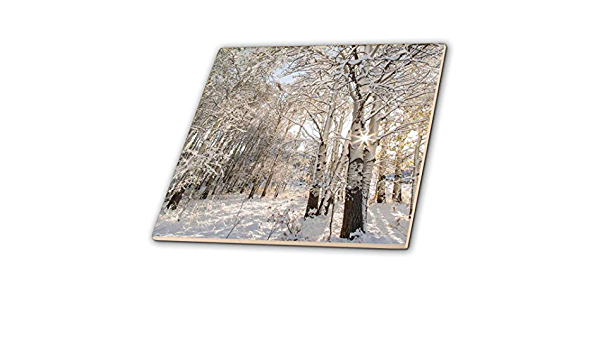 3drose Snowfall On Quaking Aspen Trees In Glacier National Park Montana Usa Ceramic Tile 12 Inch Ct 190169 4 Multicolor Home Kitchen
