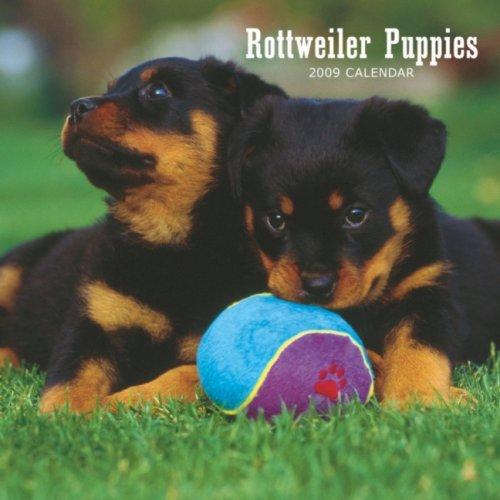 Dog 2009 Mini Calendar - Rottweiler Puppies 2009 7X7 Mini Wall Calendar
