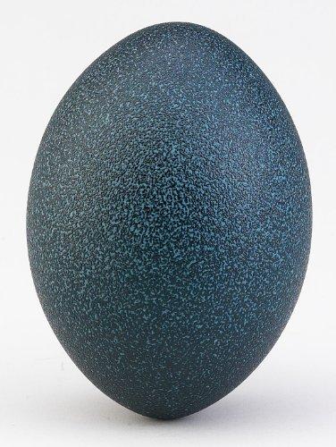 Emu Eggshell