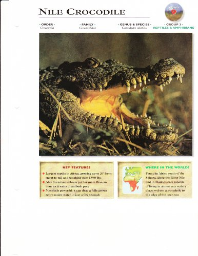 Wildlife Explorer CARD Animals Educational Facts Nile Crocodile Reptiles & Amphibians Group 3 Card 9 (Wildlife Explorer Animal Cards)