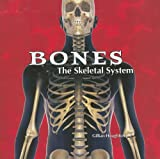 The Skeletal System, Gillian Houghton, 1404221824