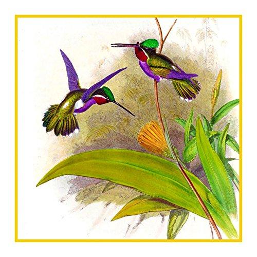 Orenco Originals Long Billed Hummingbird Detail 2 Gould Bird Counted Cross Stitch Pattern