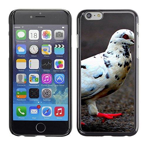 "Premio Sottile Slim Cassa Custodia Case Cover Shell // V00003709 pigeon 3 // Apple iPhone 6 6S 6G PLUS 5.5"""