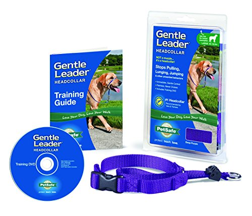 PetSafe Gentle Leader Head Collar with Training DVD, MEDIUM 25-60 LBS., DEEP PURPLE by PetSafe (Image #3)