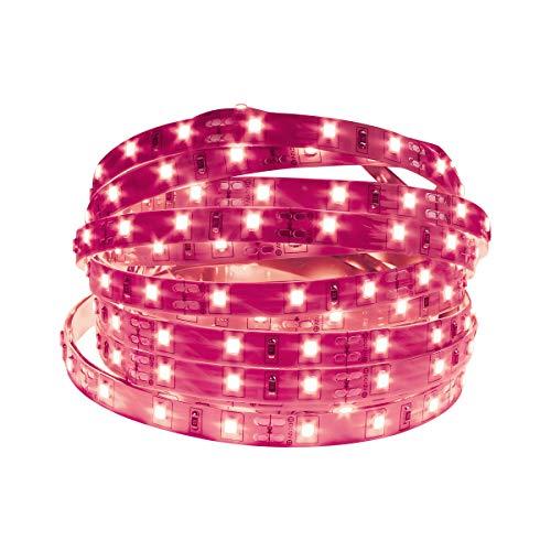 Hot Pink Led Lights