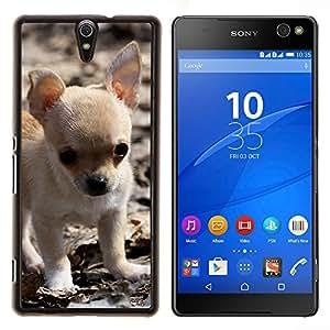 YiPhone /// Prima de resorte delgada de la cubierta del caso de Shell Armor - Chihuahua cachorro pequeño perro de mascota bebé - Sony Xperia C5 Ultra