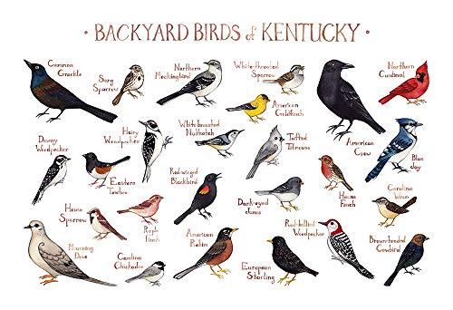 - Backyard Birds of Kentucky Field Guide Art Print