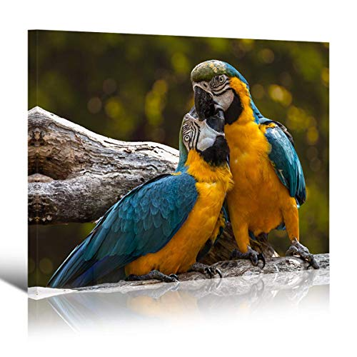(Mon Art-Pair of Blue and Yellow Macaw Grooming on Tree Branches Canvas Print Parrot Bird Picture Wall Art Modern Lovebird Artwork Decoration for Living Room Bedroom Home Decor 12x16x1,Framed)