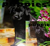 2014 Puppies 12 Month Calendar Includes Mini Calendar As Shown in the Photo