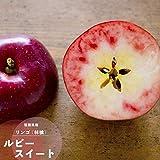 果樹苗 りんご 苗木 ルビースイート 2年生 挿し木 6号(18cm) ポット苗 果樹苗木 落葉樹 リンゴ