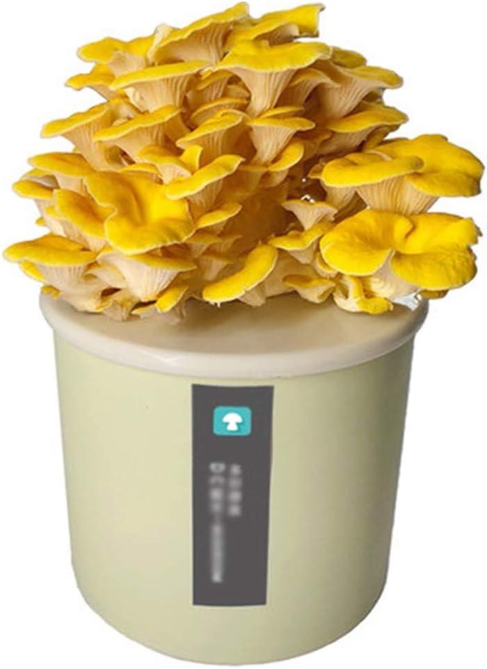 Garden Outdoors Setas Autocultivo Comestibles Kit, DIY Caja de Cultivo Casero De Setas Ostra, Cultivo Setas en Casa Interior y JardinBlue-ELM Yellow Mushroom