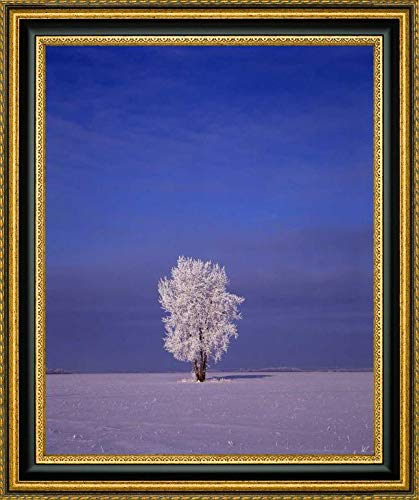 Canada, Dugald, Hoarfrost on Cottonwood Tree by Mike Grandmaison - 20.25