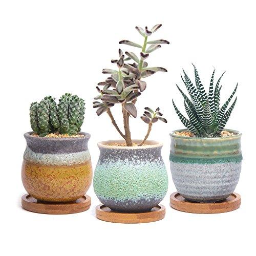 3 plant tray - 5