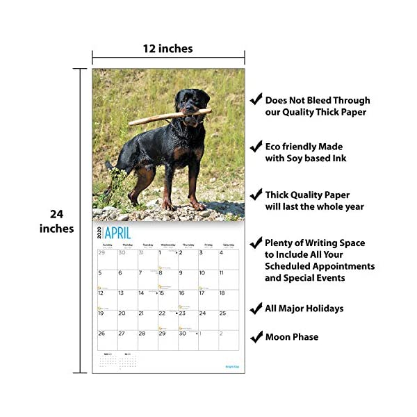 2020 Rottweilers Wall Calendar by Bright Day, 16 Month 12 x 12 Inch, Cute Dogs Puppy Animals Rottie's Canine 4