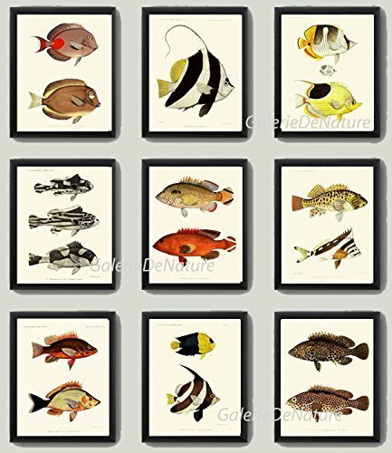 Fish Print Set of 9 Antique FRD Beautiful Tropical Black White Stripe Red Yellow Colorful Colored Illustration Natural Science Home Room Decor Wall Art ()