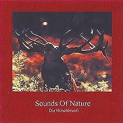 Sounds Of Nature - Die Hirschbrunft