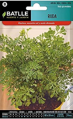 Semillas Aromáticas - Ruda - Batlle: Amazon.es: Jardín