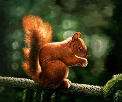 Oil Painting 'Animal Squirrel On Branch Of Pine Tree', 10 x 12 inch / 25 x 31 cm , on High Definition HD canvas prints is for Gifts And Bath Room, Living Room And Study Room Decoration