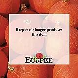 Burpee Red Kuri Winter Squash Seeds 10 seeds