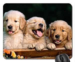 Golden retriever puppies Mouse Pad, Mousepad (Dogs Mouse Pad)