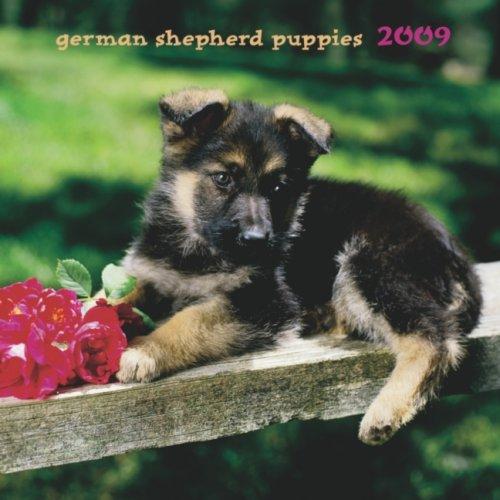 Dog 2009 Mini Calendar - German Shepherd Puppies 2009 7X7 Mini Wall Calendar