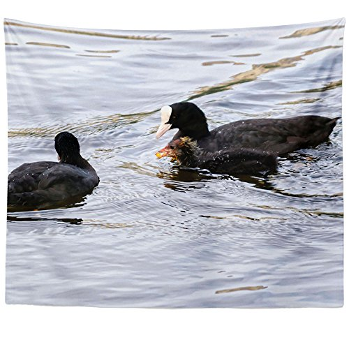 - Westlake Art - Water Duck - Wall Hanging Tapestry - Picture Photography Artwork Home Decor Living Room - 68x80 Inch (E3393)