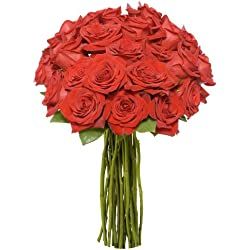 Benchmark Bouquets 2 Dozen Red Roses, for Valentine's Day No Vase