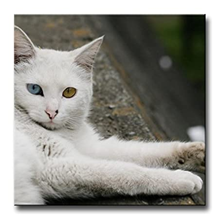 b0a94de1fa Wall Art Painting Odd Eyed Turkish Angora Cat Prints On Canvas The Picture  Animal Pictures Oil For Home Modern Decoration Print Decor  Amazon.co.uk   Kitchen ...