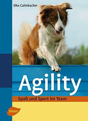 Agility  Spaß Und Sport Im Team