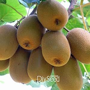 PLAZO !! 100 Semillas / Semillas del corazón porción amarilla fruta de kiwi frutas y verduras orgánicas Kiwi Bonsái Semillas, # G0HZZG