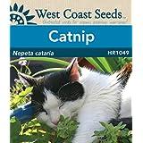Catnip Seeds (approx. 450 seeds)
