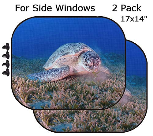 MSD Car Sun Shade - Side Window Sunshade Universal Fit 2 Pack - Block Sun Glare, UV and Heat for Baby and Pet - Image ID 34267839 A Green Chelonia mydas Feeds on sea Grass in The Red Sea