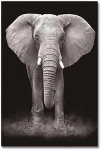 7,8x11,8 Jin/Yi/Global Leinwand Wandkunst Schwarz-Wei/ß-Tierdruck Poster Elefant Leinwand Malerei Dekor Wohnzimmer Bilder f/ür Raum 20x30cm Kein Rahmen
